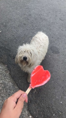 My favorite ice cream ft. mop